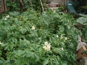 espacio de patatas