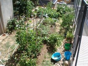 vista del espacio de legumbres