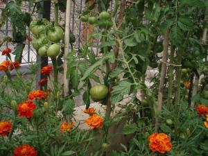 el jardin comestible