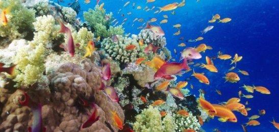1277019806_underwater-wallpaper-26