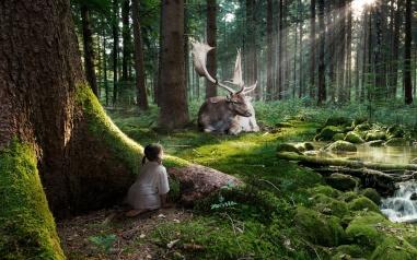fairytale_forest-1280x800