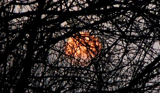 639 el sol enramado