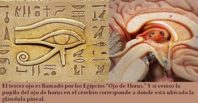 pineal-gland-and-horus