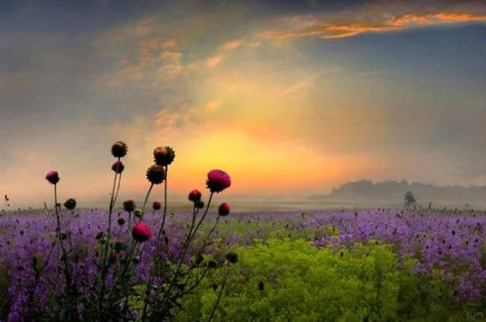 flores-amanecer