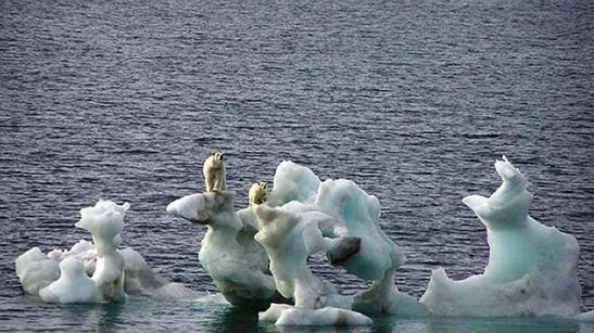 osos-polares--644x362