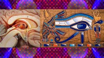 ojo-horus-pineal