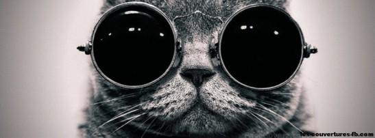 chat-à-lunettes-photo-de-couverture-journal-facebook