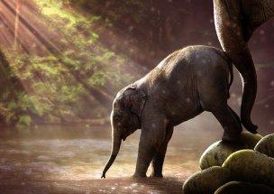 elefante-pequeño