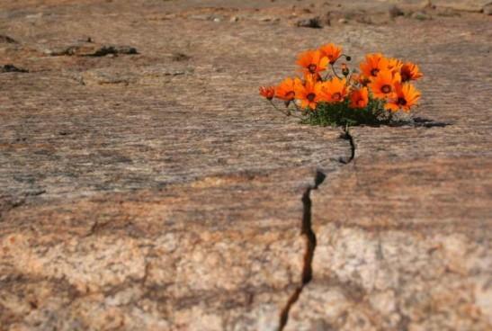 flores-en-el-desierto