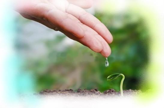 semilla-y-concepto-del-establecimiento-con-agua-de-la-mano-89205739