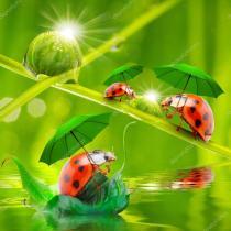 depositphotos_66002727-stock-photo-little-ladybugs-with-umbrella-over