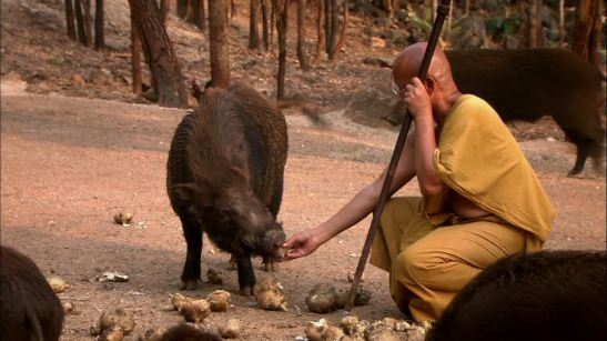 753019070-berraco-pista-ruta-alimentar-cuidado-de-animales-monje