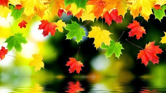 Bellas hojas de otoño cayendo una por una al agua