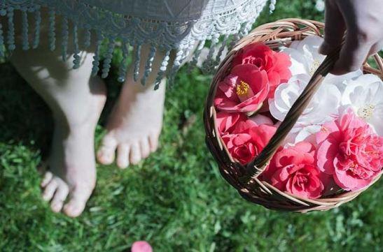 Camelia_romanticas_flores