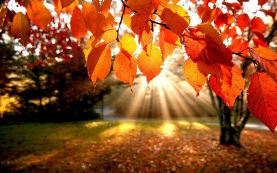 fall-leaves-hq-760x475@2x