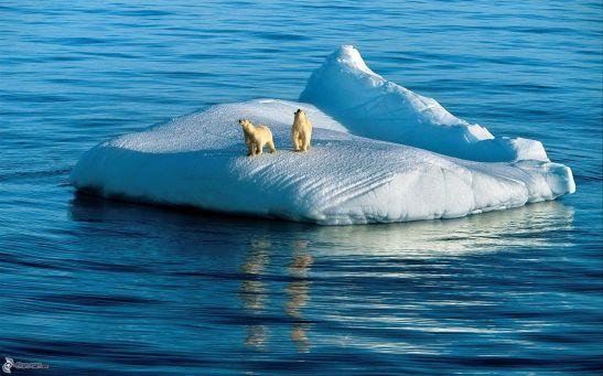 oso-glaciares