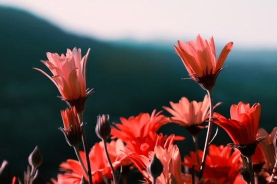 vermelles1